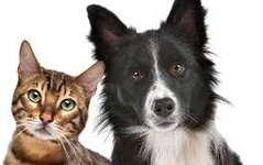 Are Essential Oils Hurting Our Pets?