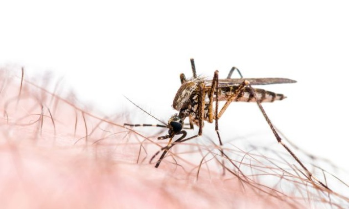 Are the Mosquitos getting too friendly? Here are some tips to keep them away from your home.