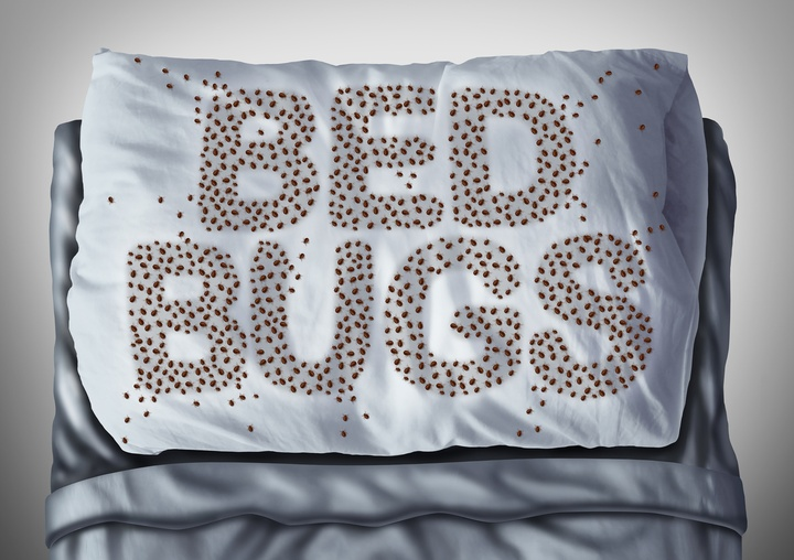3 Keys to a Successful Bed Bug Plan for Multi-Tennant Property Owners