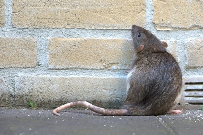 3 Smart Tactics to Keep Rodents Away from Your Property This Winter