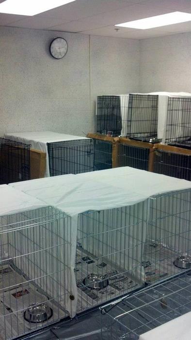 Jersey Shore Animal Foundation