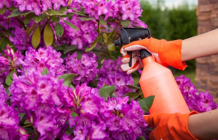 Looking to do some DIY Pest Control? Check out these tips.