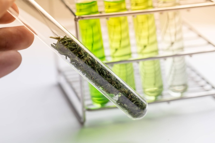Pharmaceutical Agents that Affect the Endocannabinoid System, Better than Natural Cannabis?