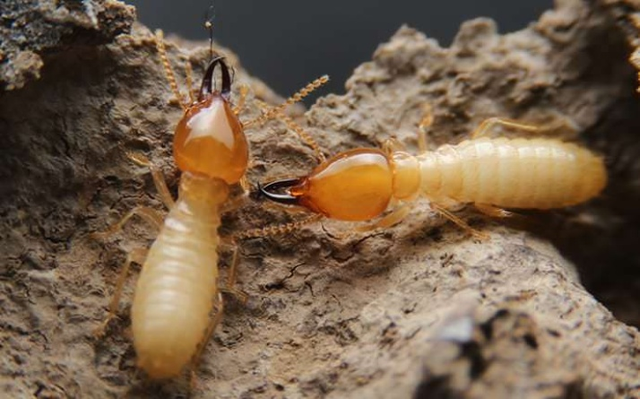 5 Myths About Termites in New Jersey