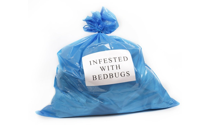 What to do if you think you have BED BUGS!
