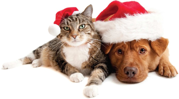 Happy Holidays for You and Your Furry Friends