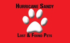 Hurricane Sandy Lost and Found Pets