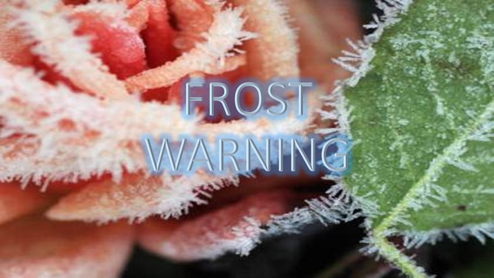 Protect your flowers and plants from frost