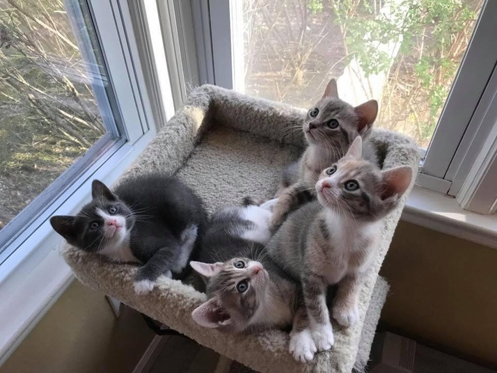 Furry Friends Are Waiting