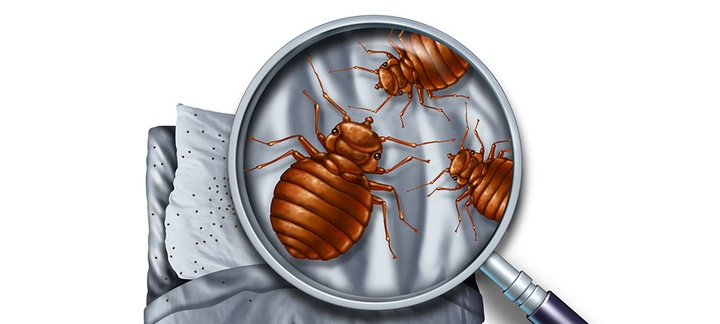 Did You Know These Things About Bed Bugs?