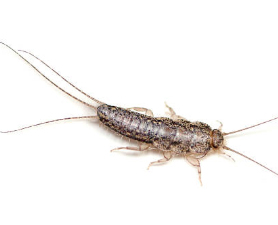Silverfish Control New Jersey
