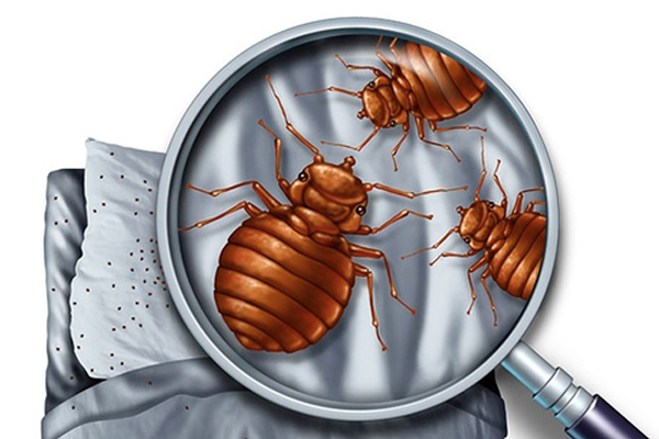 Did You Know These 6 Things About Bed Bugs?