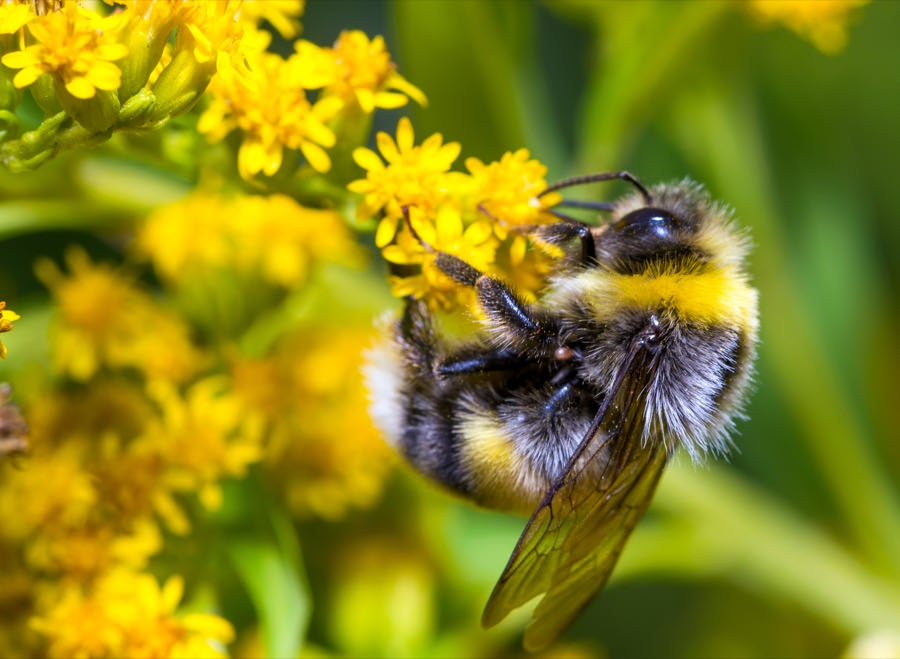 Bumble Bee Control New Jersey