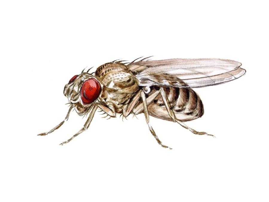 Fruit Fly  Control New Jersey