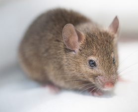 Mouse Control in NJ