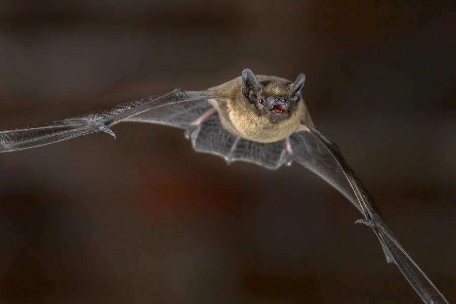 Bat Control New Jersey