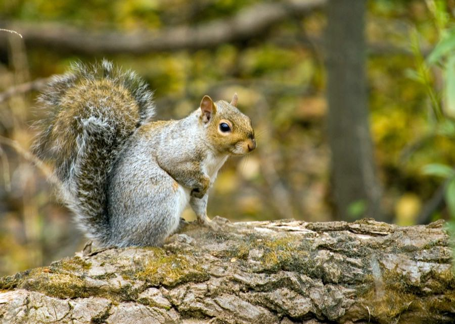 Squirrel Control in New Jersey