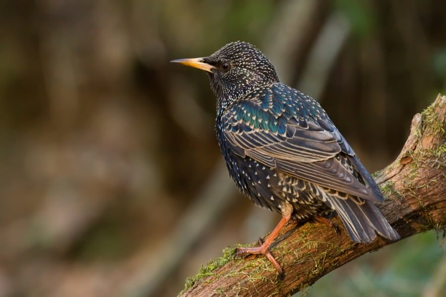 Starling Control in New Jersey