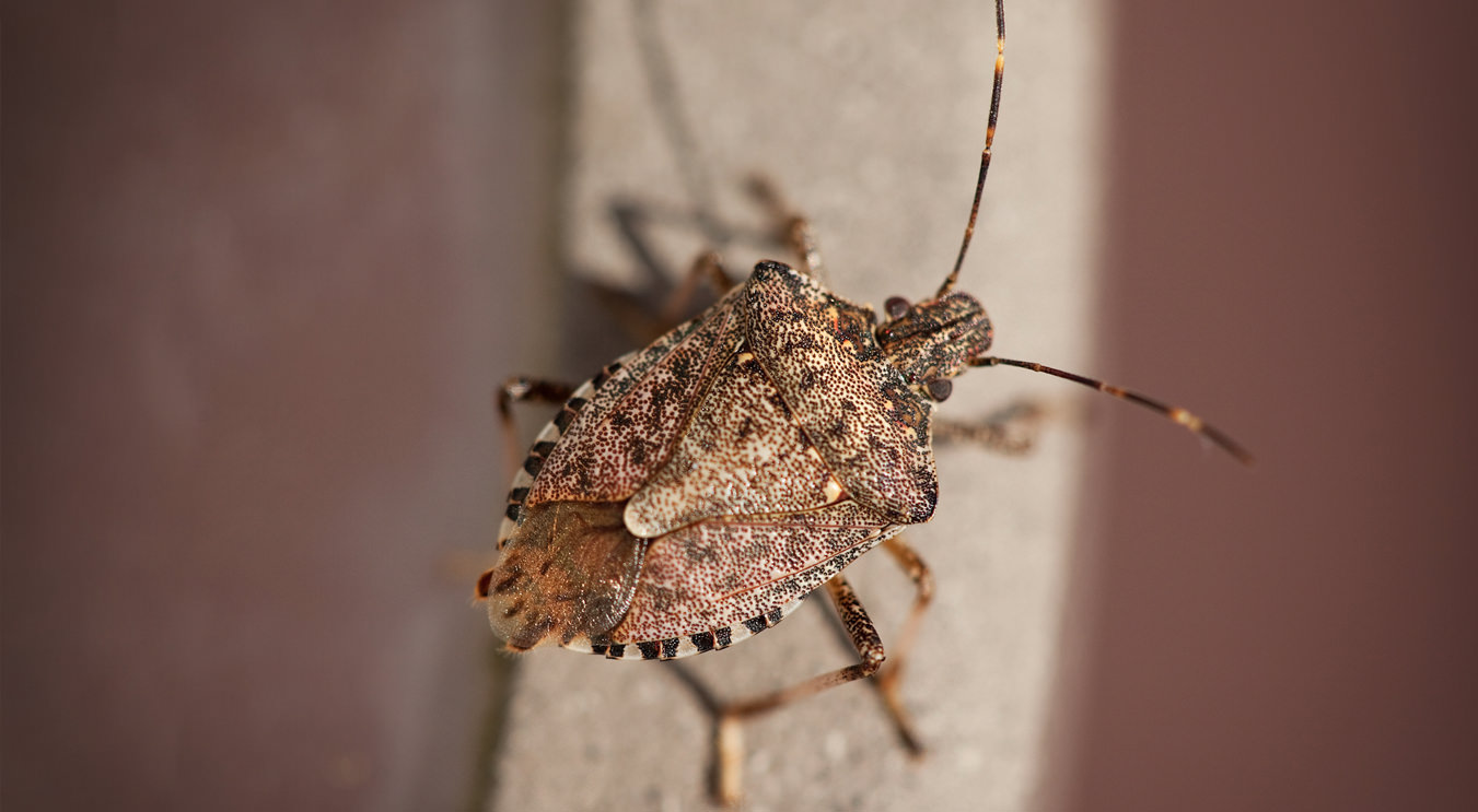 Stink Bug Control New Jersey